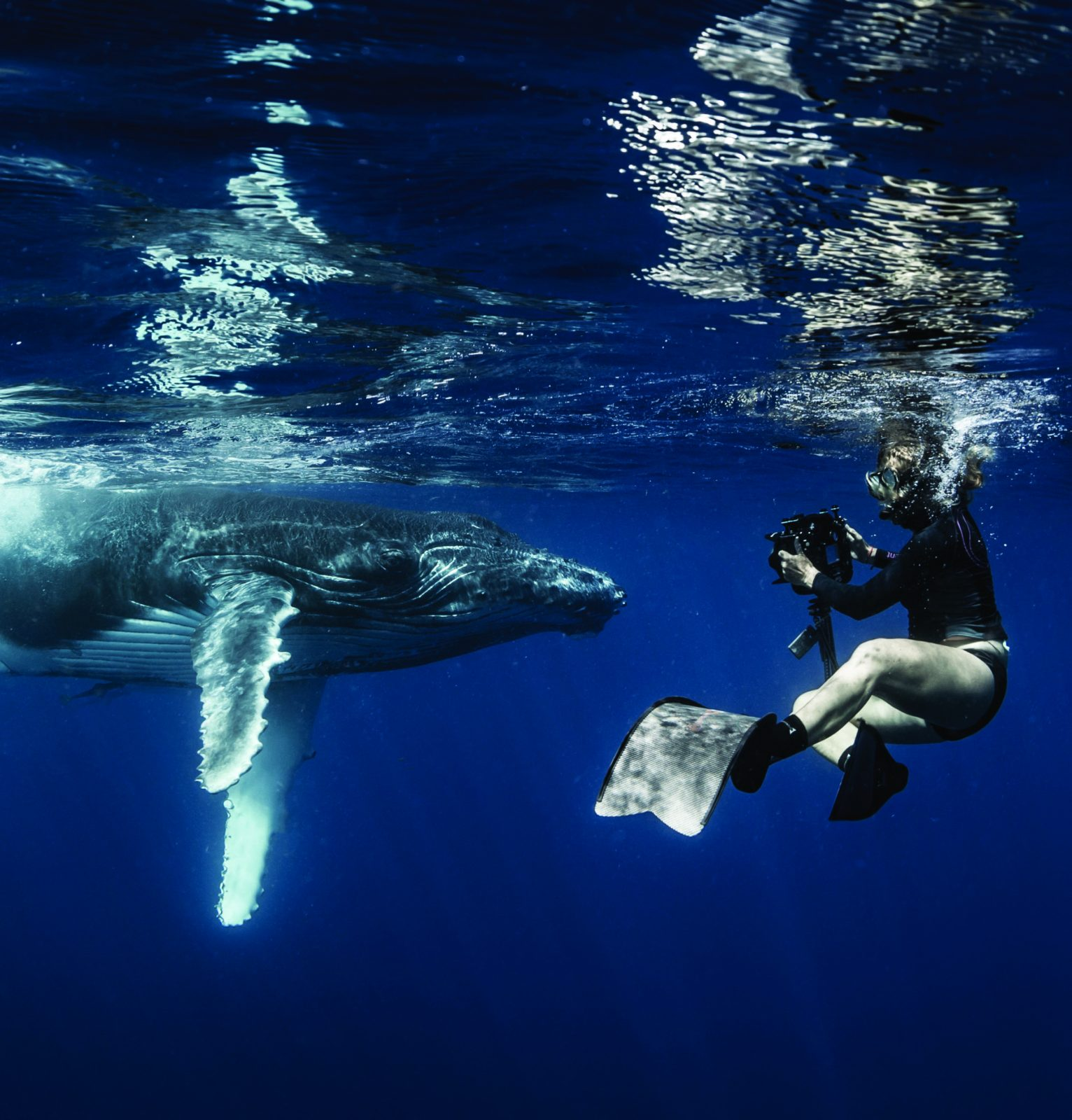 Annie Crawley pictured playful baby humpback whale