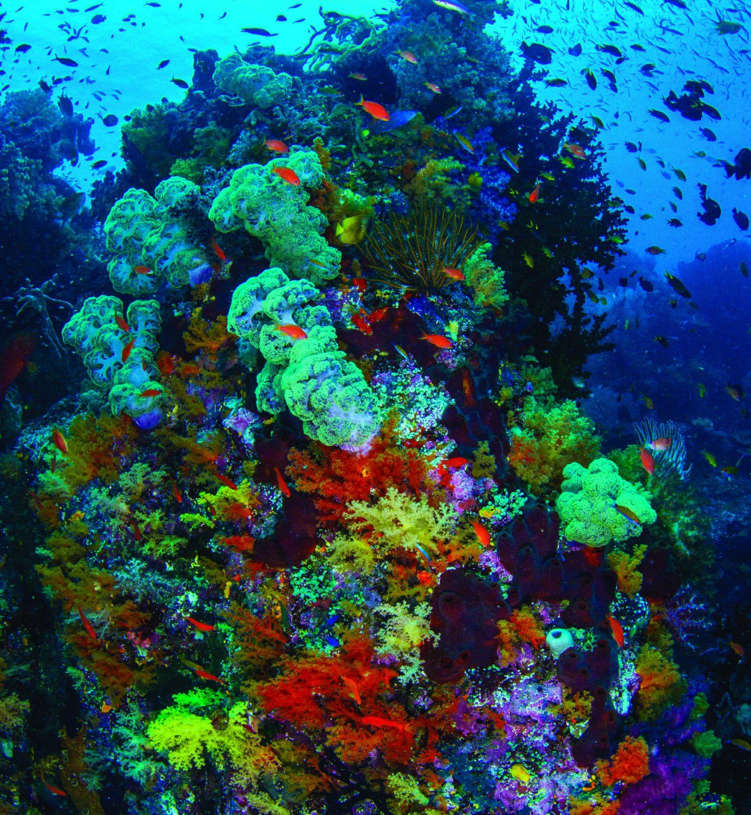 richest marine biodiversity on earth