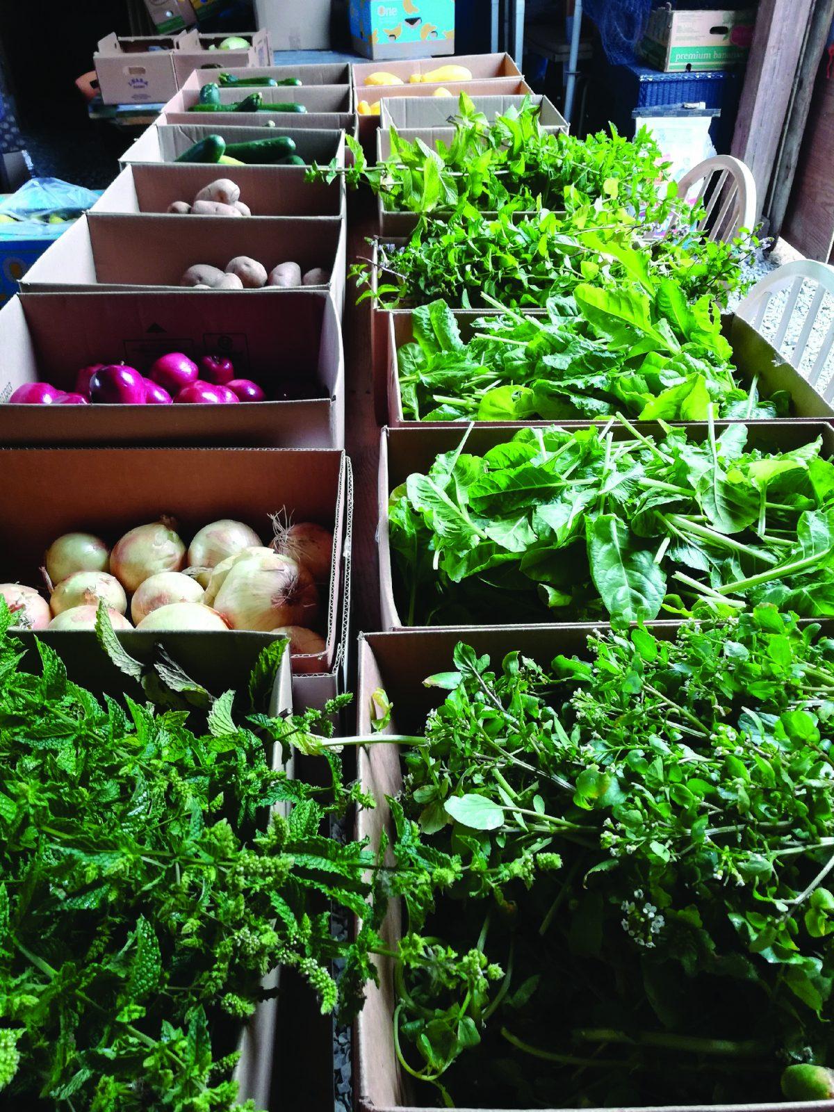 Farmer Frog healthy food